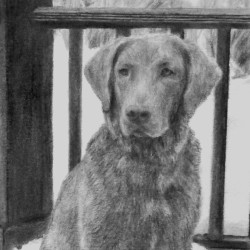 "Shelby, 2014, Graphite Pencil Drawing on Paper, 5""x7"""