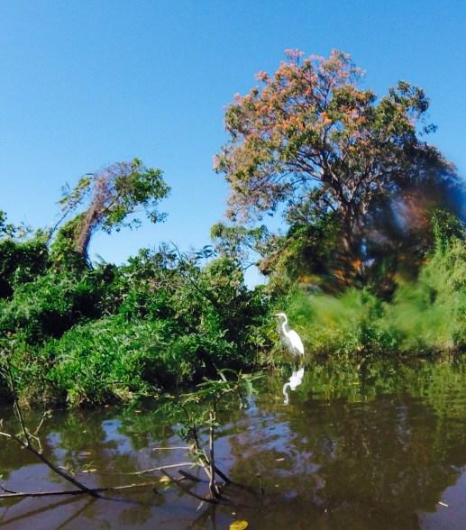 Egret Ometepe