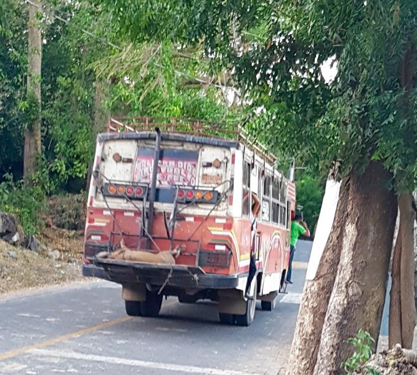 bus Ometepe
