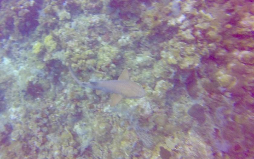 Shark Corn Island