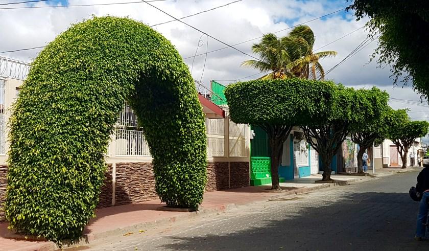 Trees Estelí