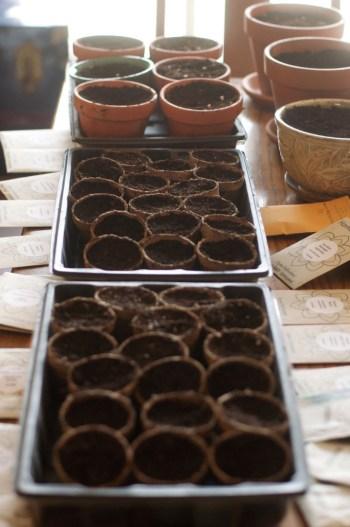 seed flats