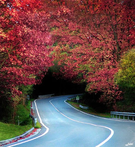 Tree Tunnel,Biscay, Basque Country, Spain