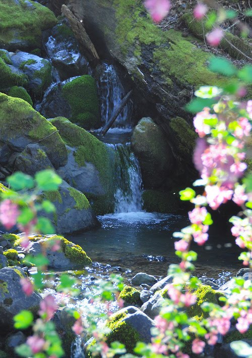 Waterfall, Humboldt, California