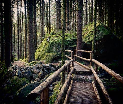 Forest Path, Cork, Ireland