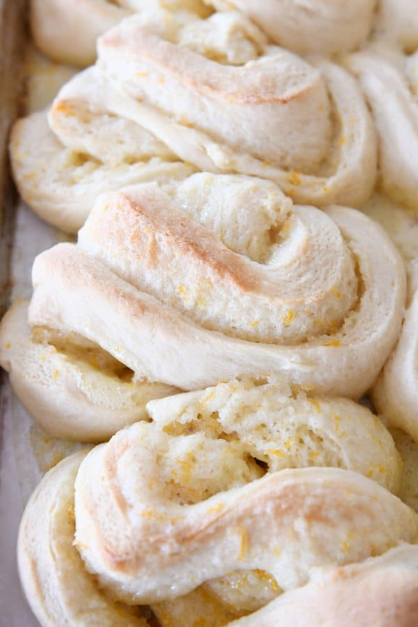 baked but unfrosted homemade orange sweet rolls on sheet pan