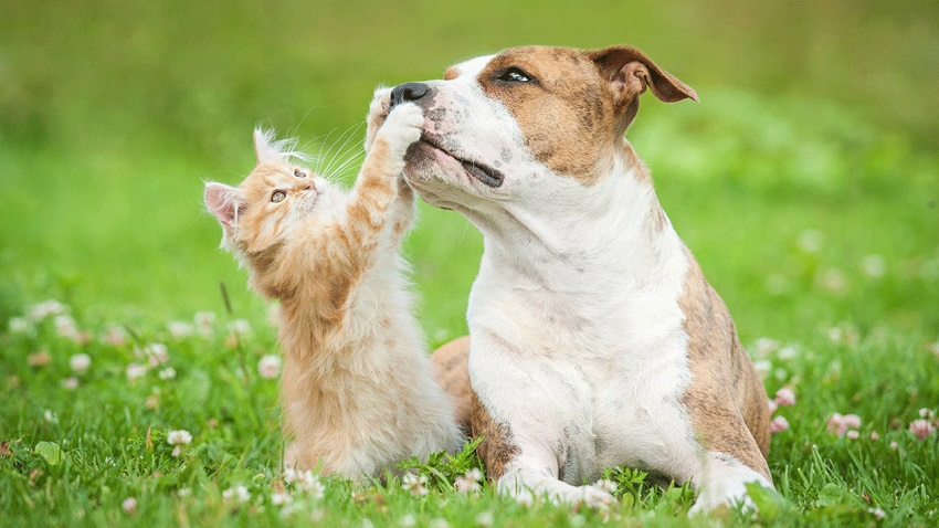 , When is the Right Time to Get a Family Pet?, Mel's Mommy Chronicles