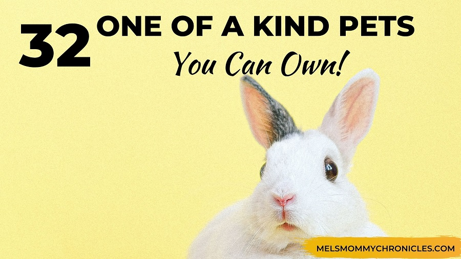 One Of A Kind Pets: 32 Wonderful Pets You Can Own!