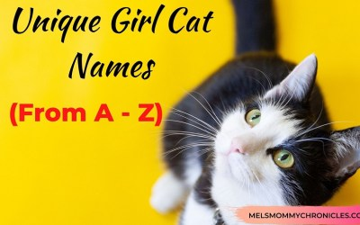 Unique Girl Cat Names: A – Z List Of 500+ One Of A Kind Names