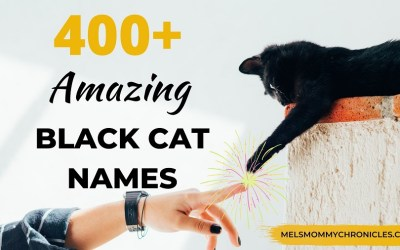 Black Cat Names (For Boy & Girl Cats): 400+ Amazing Names You'll Love!