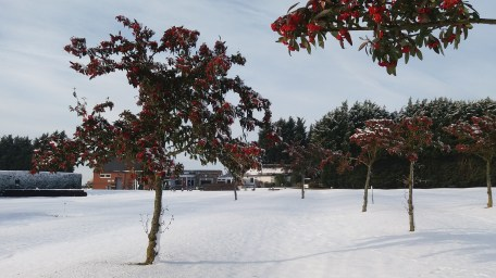 Beautiful Berry Trees in the Snow
