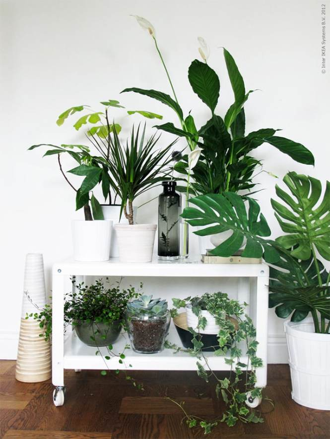 Living Room Plants Ikea Home Design Ideas