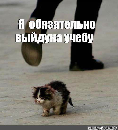 """Создать комикс мем """"бездомные животные фото до слез ..."""