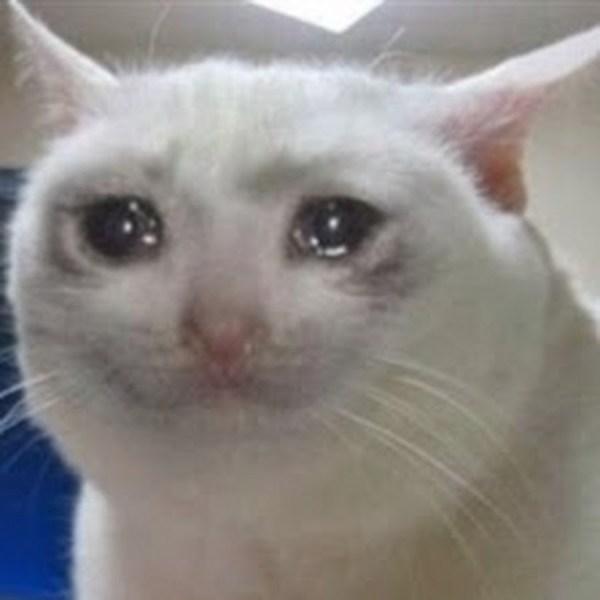 """Создать мем """"грустный плачущий кот мем картинки без текста ..."""