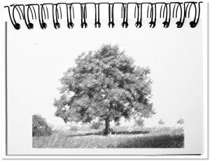 The tree - the ideal metaphor for life cycles