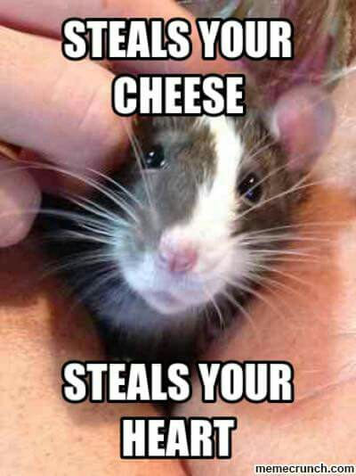 19 Hilarious Rat Meme That You Never Seen Before MemesBoy