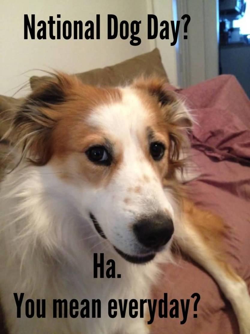 National dog day Memes