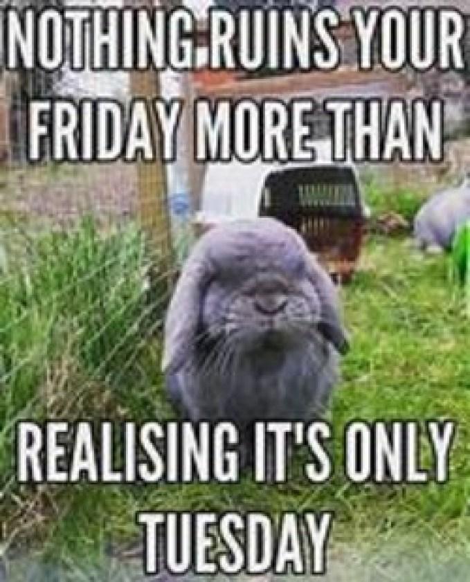 Tuesday work Memes