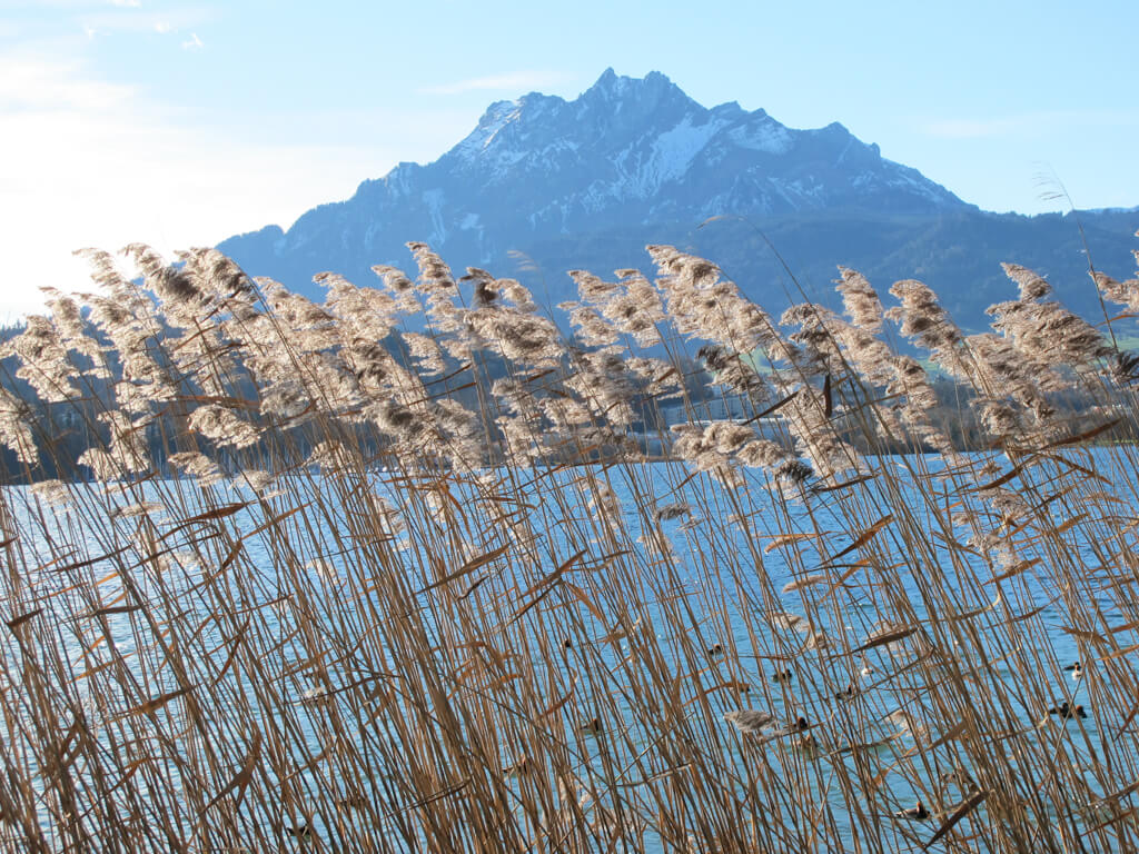 A sunny day at Lake Lucerne