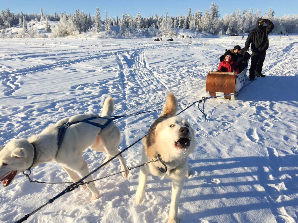 Dog Sledding at Aurora Village in Yellowknife