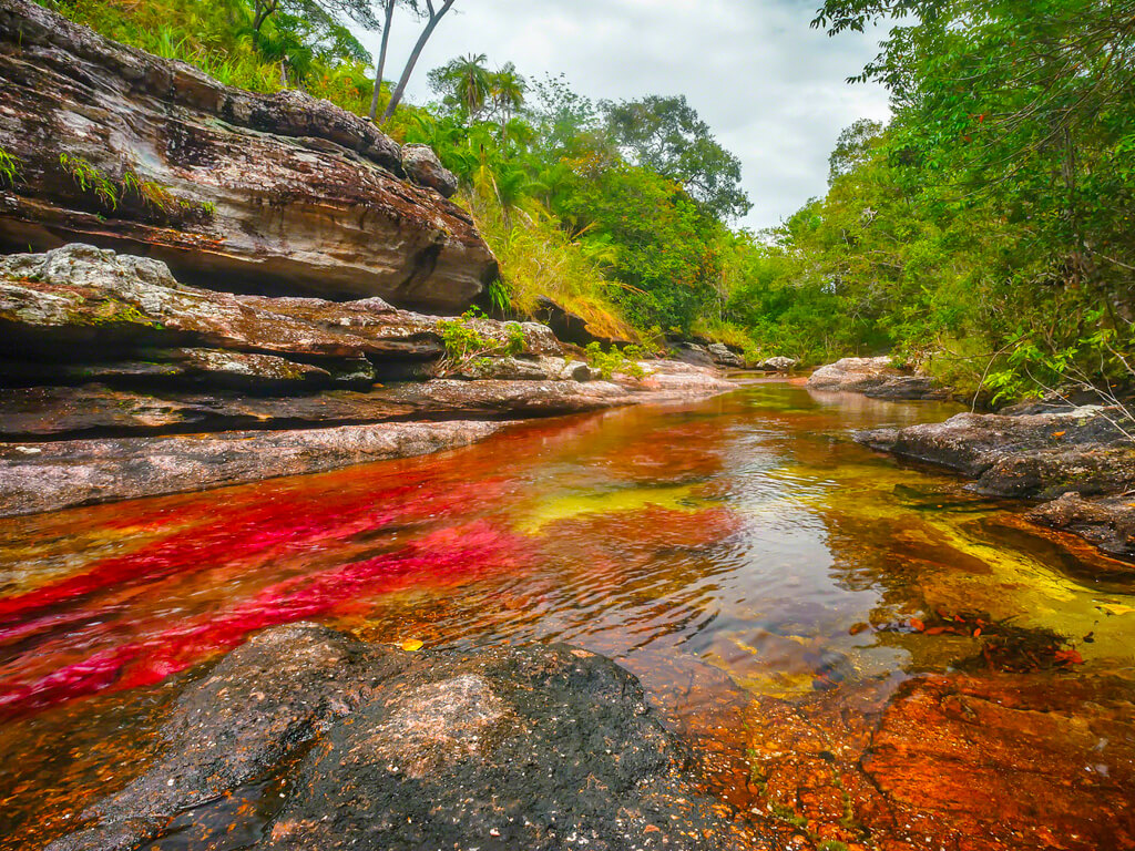 At Caño Cristales, the riverbed is a vibrant shade of red, caused by Macarenia clavigera