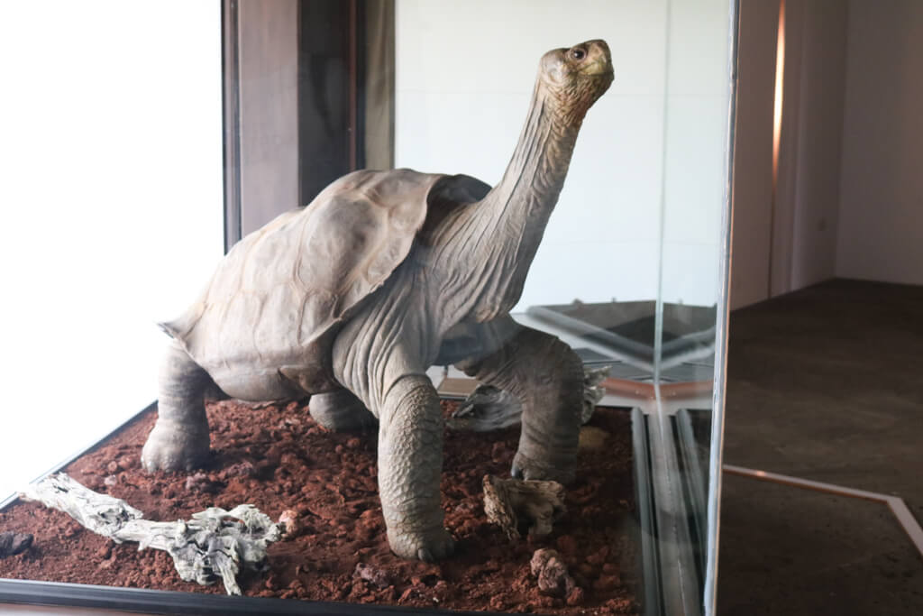 The taxidermied body of Lonesome George at Charles Darwin Research Station in Puerto Ayora, Galapagos