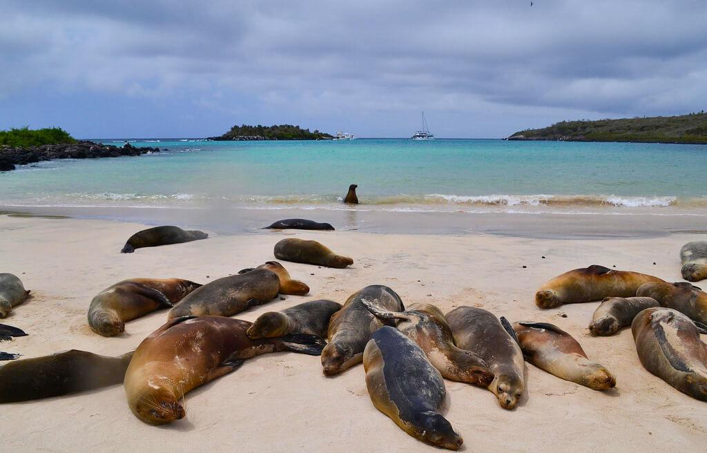 Sea Lions on Santa Fe island, Galapagos