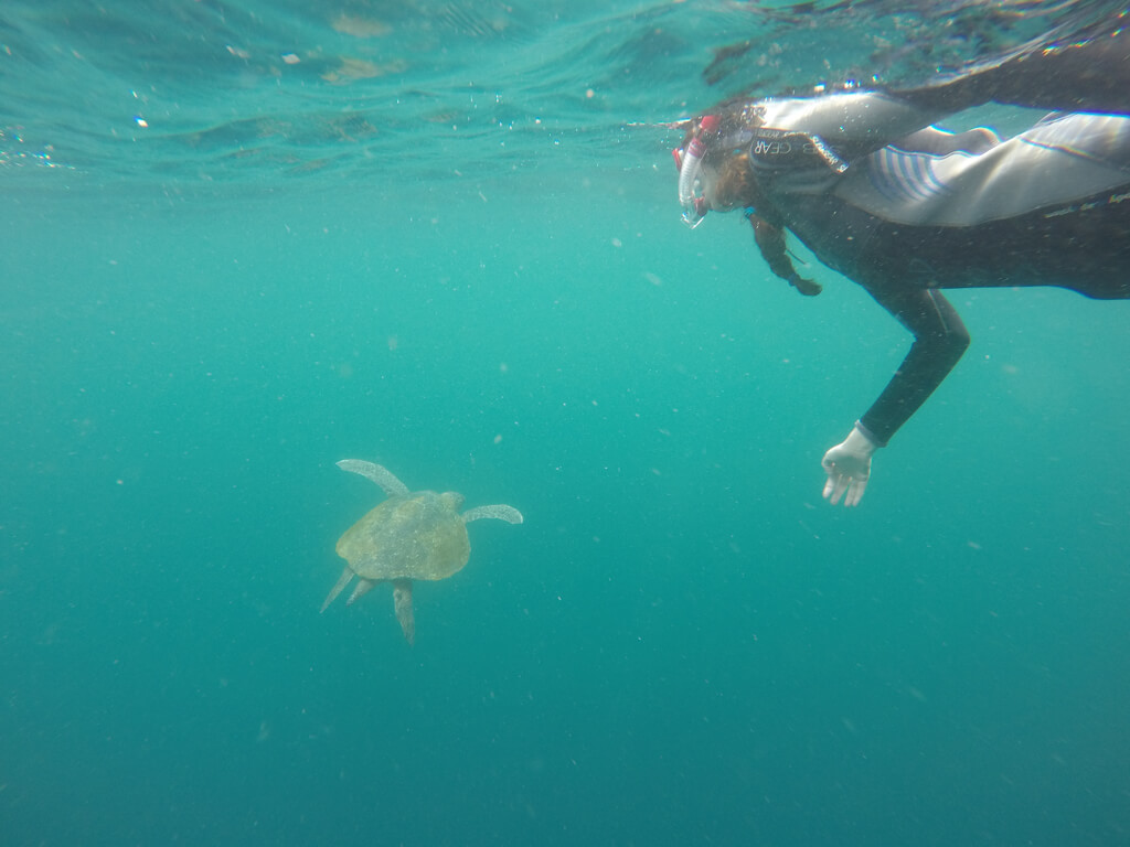 A tourists swims with a sea turtle at Kicker Rocker near San Cristobal in the Galapagos