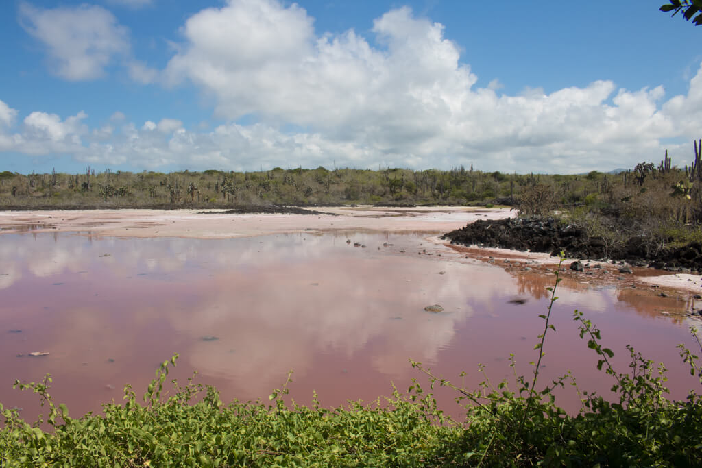 A pink salt lake in Puerto Ayora on Santa Cruz Island in the Galapagos