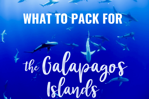 Create the perfect packing list for your cruise or land-based trip to the Galapagos Islands! Discover the best snorkel gear, footwear, cameras and travel accessories to bring!