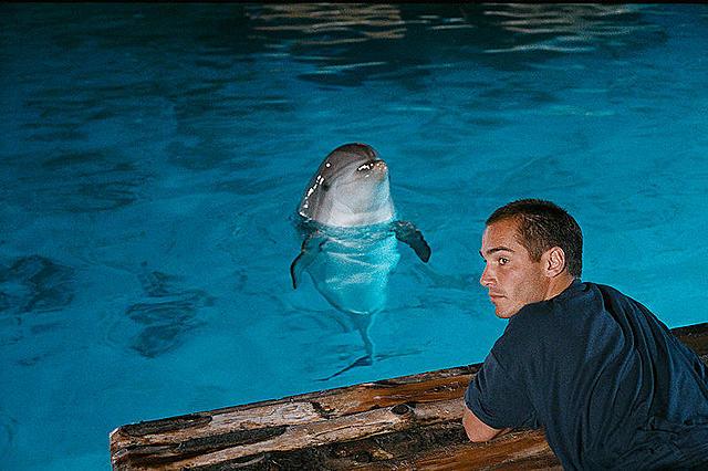 【グラン・ブルー 完全版】感動のラスト – 海が好きになるおすすめ名作映画