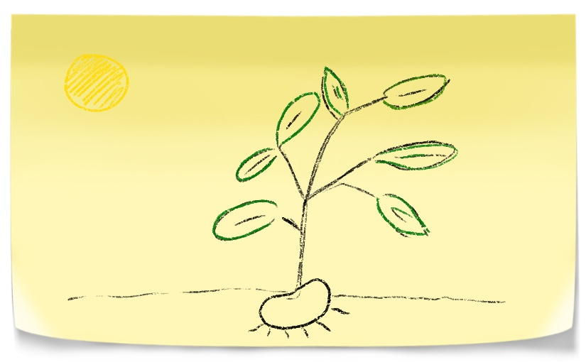 A plant as a metaphor for growth mindset