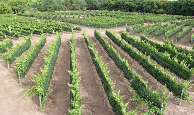 Donarán un terreno para fines agropecuarios