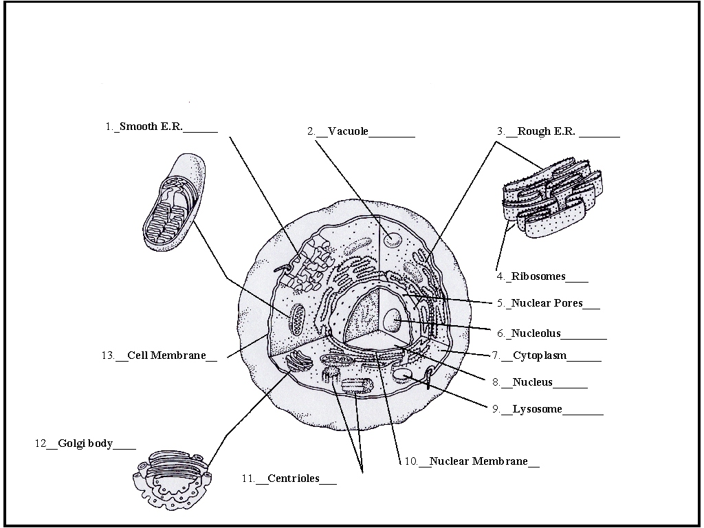 Animal Cell Coloring Diagram Coloring Pages