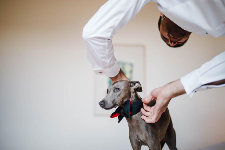 casamento gerês noivo colocando laço em cão nos preparativos para a cerimónia