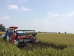Ketua SPI Sebut PHK Tingkatkan Tenaga Kerja Sektor Pertanian