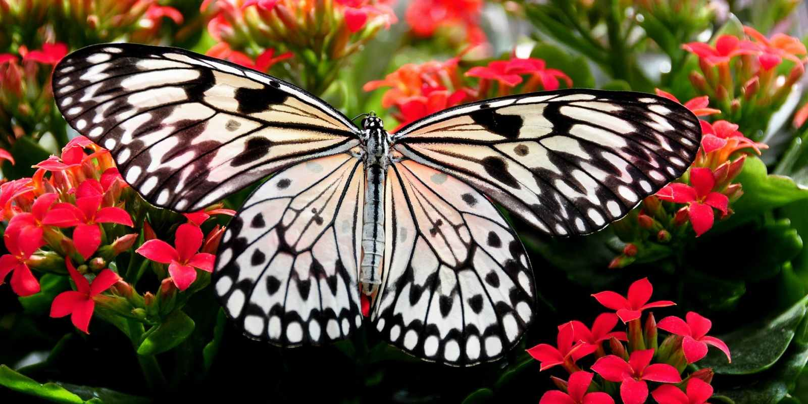 paper kite butterfly perching on red flower in close up photography
