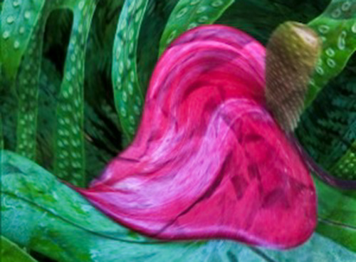 melting anthurium