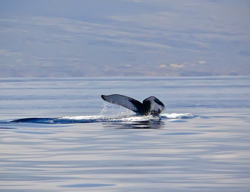 whale tail for blog