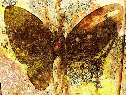 Butterfly Gold © lynette sheppard