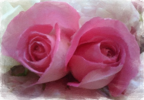 Pink Roses © lynette sheppard