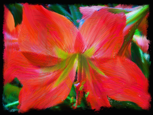 Vibrant Amaryllis © lynette sheppard