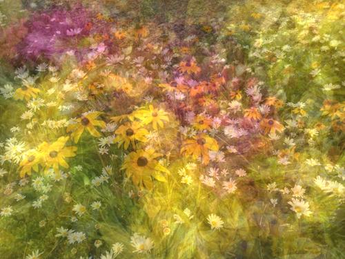 High Sierra Flowers © lynette sheppard