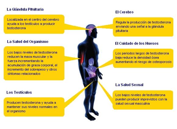 sintomas de testosterona baja en hombres