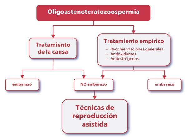 algoritmo oligoastenoteratozoospermia