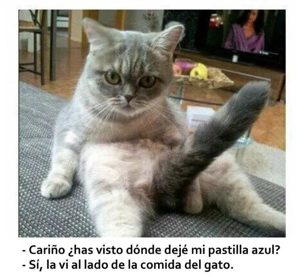 humor viagra gato