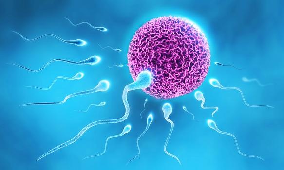 Efecto de los anestésicos tópicos sobre la fertilidad