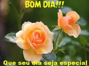 Tag Frases De Bom Dia Linda Flor