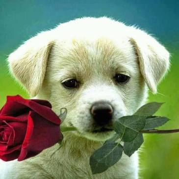 para voce com carinho – mensagens carinhosas com amor