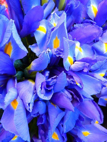 imagens de flores 11